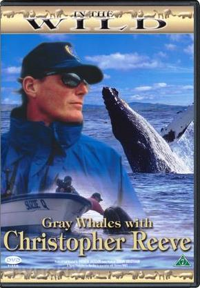 In the Wild - Gray Whales with Christopher Reeve (DVD)